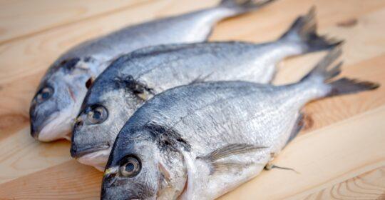 El consumo del pescado y el mercurio